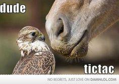 Dude... tictac!