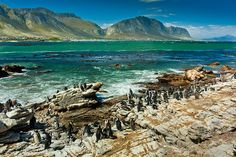 National Parks and Wildlife on the Garden Route in South Africa. A Garden Route Road Trip Itinerary from Capetown to Addo Elephant National Park. Tsitsikamma National Park, South Africa, Africa Map, Africa Travel, Boulder Beach, Seaside Towns, The Dunes, Beach Holiday, Travel Planner