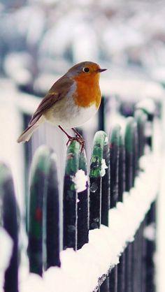 Good Morning Happy December More Le 3 décembre it snow ! Pretty Birds, Love Birds, Beautiful Birds, Animals Beautiful, Animals And Pets, Cute Animals, Happy December, Hello January, Hello December Quotes