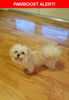 Is this your lost pet? Found in Miami, FL 33156. Please spread the word so we can find the owner!  Description: Small white dog.  Very friendly with people, cats and other dogs.  Available for adoption if owner is not found.  Nearest Address: SW 100th Street and 82nd Ave.