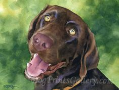 CHOCOLATE LAB Art Print Signed by Artist DJ Rogers  About the Artwork:  This is a professional open edition Chocolate Lab art print from an original watercolor painting.  Chocolate Lab art print is hand signed on the front by the artist. The detail and color are outstanding. Print is on high quality acid free watercolor paper with archival inks to look and feel just like the original. A Certificate of Authenticity is also included.  *Please note, watermark is for display purposes only and…