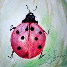 Items similar to Lady bug watercolor painting wall decor art on Etsy Wall Art Decor, Watercolor Paintings, My Etsy Shop, Ladybugs, Animals, Check, Animais, Animales, Watercolour Paintings