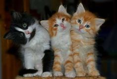 OMG! I've just been bowled over by cuteness!