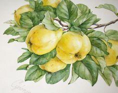 fruit patterns by Natalia Tyulkina, via Behance