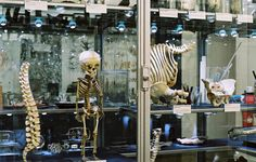 Berlin Medical History Museum