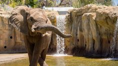 Fitness Trackers Aim To Improve The Health And Happiness Of Zoo Elephants http://www.npr.org/sections/health-shots/2017/01/11/509181472/fitness-trackers-aim-to-improve-the-health-and-happiness-of-zoo-elephants