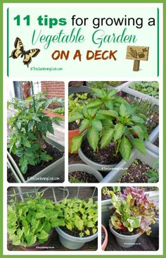 Want vegetables but don't have much room?  No problem. See my 11 tips for growing a vegetable garden on a deck.  #ad #GilmourGardens #GilmourGardening