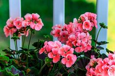 """""""Top 10 Hard-to-Kill Houseplants Bring the outside in with these handsome, low-maintenance houseplants."""""""