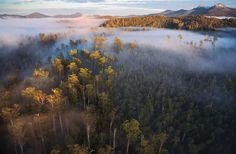 "Petition- Tony Abbott: Protect Tasmania's forests and uphold the Tasmania Forestry Agreement"". Photography Awards, Image Photography, Landscape Photography, Nature Photography, Explore Dream Discover, Alpine Plants, Tasmania, Conservation, National Parks"