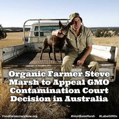 If you haven't heard of Steve Marsh yet, he is an organic farmer in Australia who sued a neighboring farmer for compensation after his field of non-GMO wheat was contaminated by Michael Baxter's RoundUp Ready canola seeds. He is now appealing the ruling with support of several non-GMO groups. More here: http://www.nationofchange.org/organic-farmer-steve-marsh-appeal-gmo-contamination-court-decision-australia-1405609760 #iamstevemarsh #food #organic #contamination #GMOs
