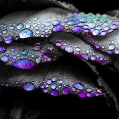 color-splash.jpg Photo:  This Photo was uploaded by DeviousDemon. Find other color-splash.jpg pictures and photos or upload your own with Photobucket fre...