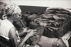Une Cubaine à la fabrication de cigares