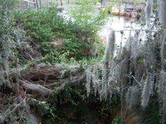 Abandoned water park at Walt Disney World (56 pics)