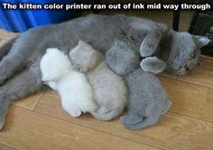 Ombre cats-3D printer needs dark ink refill