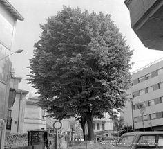 Plaza Tellagorri, conocida como Plaza del Tilo, años 70 (Colección Eugenio Gandiaga) (ref. SC1319)