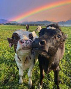 Cute Baby Cow, Baby Cows, Cute Cows, Baby Farm Animals, N Animals, Animals Planet, Barnyard Animals, Nature Animals, Cute Animal Photos