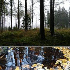 Metsien mies poikkesi kotona Kuopiossa. Tänään päivämatka Lahteen. #ilovekuopio #ilovepuijo