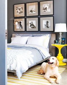 Does this beautiful bedroom come with the golden retriever? LOVE! {Photography by Virginia Macdonald}