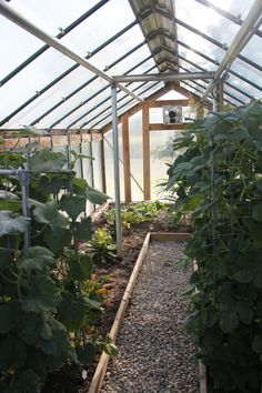 Inside greenhouse plans plants gardening pinterest for Do it yourself greenhouse plans