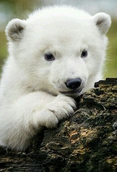 cute pictures of animals