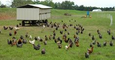 pastured poultry   An EggMobile - Hen House on Wheels