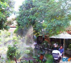 SEN CAFE - http://www.danhsachviet.vn/dia-diem/quan-cafe/quan-12-tp.-ho-chi-minh/c2l15