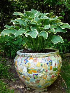 Hosta in a mosaic planter. Beautiful! Could be a project for those of us who save our broken pretties. I like how it's deliberately mismatched.