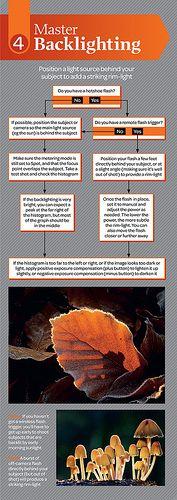 Free macro photography cheat sheet - part 4 | by digitalcameraworld