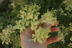 Uses for elder flowers