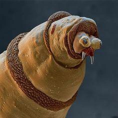 дождевой червь под микроскопом(62) Одноклассники