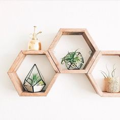 Adding to my wish list NOW! Hexagon shelves are from @fit.lao and air plants and terrariums from @handmadesammade!!
