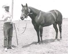 Poco Pine - 1954 bay AQHA stallion. Inducted into the AQHA Hall of Fame in 2010. Arrow's great-great-great grandsire, sire's side.