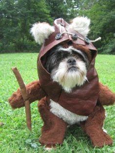 Star Wars Dog, #ewok
