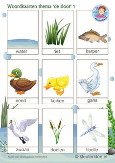 "Word cards for children, themed ""the kleuteridee. Preschool Education, Preschool Themes, Activities For Kids, Lake Animals, Pond Animals, Learn Dutch, All About Water, Dutch Language, Pond Life"