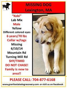 """Missing Male Lab Mix Lexington MA 6/10/14 """"Kobi"""" is 6 years/70 lbs, Yellow, Different colored eyes. Collar w/ tags. Missing near Mountain Rd & Turning Mill Rd. SHY/TIMID. DO NOT CHASE! Family is new to area!! Please call with any information: 704-877-6168"""