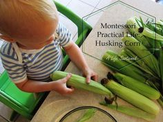 Montessori Practical Life activity --  Husking Corn