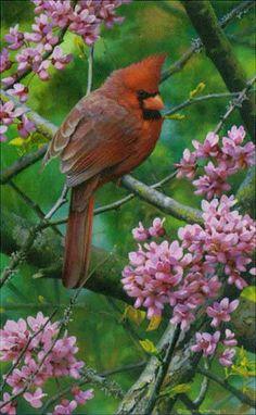 CarlBrenders - Spark of Ruby - Cardinal