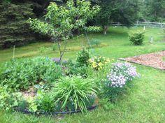 Peach tree-dynamic accumulators, companion plants, pollinators (raw veggies)