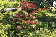 Tóquio zen Jardins-do-Museu-Nezu-toquio-relato