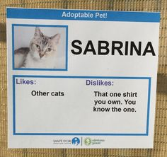 These cats were given hilarious likes and dislikes so they would get adopted