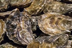 """Download the royalty-free photo """"The group of fresh oysters at the fish market."""" created by phasuthorn at the lowest price on Fotolia.com. Browse our cheap image bank online to find the perfect stock photo for your marketing projects!"""