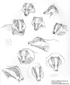 Daily Animal Sketch – Badgers and Caribou – The Last of the Polar Bears