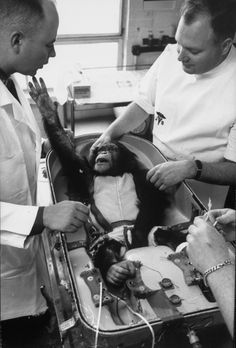 Ham (1956 – 1983), also known as Ham the Chimp and Ham the Astrochimp, was the first chimpanzee launched into outer space in the American space program