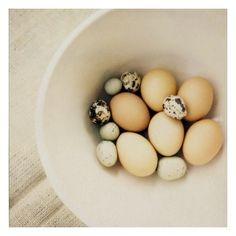 #so65 #eggs eggs