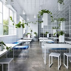"""Sibling installs wireframe """"matrix"""" in Squint/Opera's Melbourne office"""