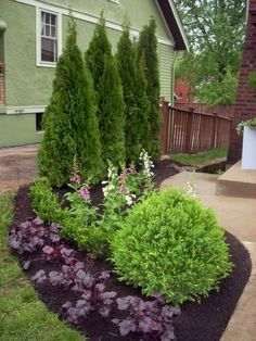 Front Yard Garden Design Save money and get great ideas for inexpensive landscape plants from the experts at HGTV Gardens. - Save money and get great ideas for inexpensive landscape plants from the experts at HGTV Gardens. Landscaping Shrubs, Garden Shrubs, Front Yard Landscaping, Lawn And Garden, Landscaping Design, Backyard Privacy, Backyard Ideas, Natural Landscaping, Landscaping Software