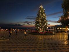 Magic Christmas Tree ... make your wish!!