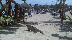 Heading to the beach! Riviera Maya Mexico