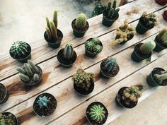cactus / photo by adrnna