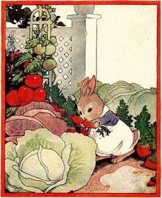 Peter Rabbit, children's book illustration 1924